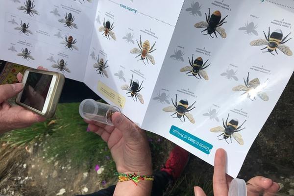 a buzz