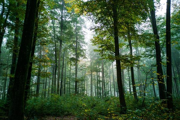 Green forest interior