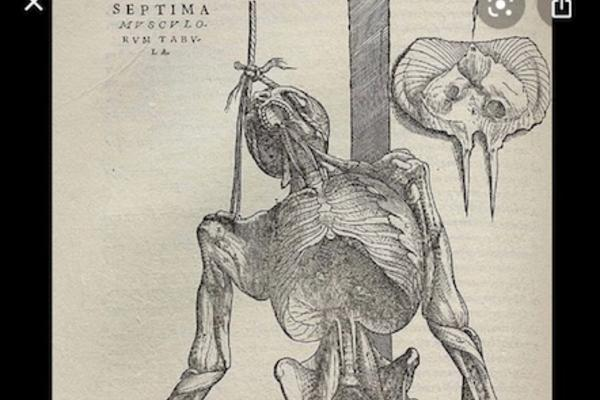 Image depicting a 16th century anatomy drawing of a standing human body by Andreas Vesalius