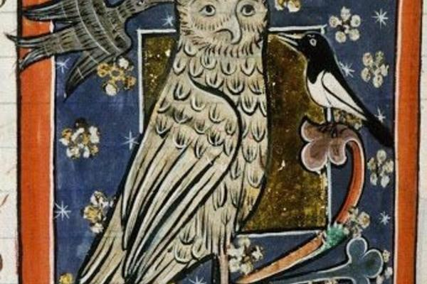 Medieval owl illimination