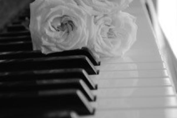white rose on piano alex lloyd