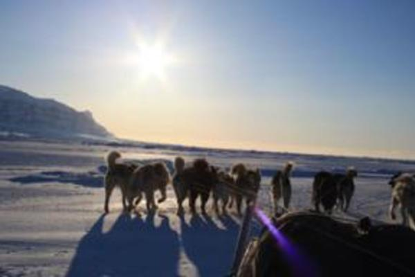 dogsled greenland 007