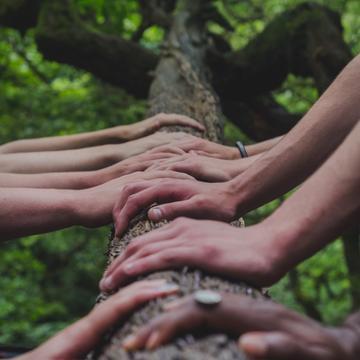 Row of hands on a fallen tree trunk.