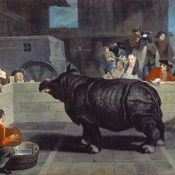 pietro longhi rhinoceros